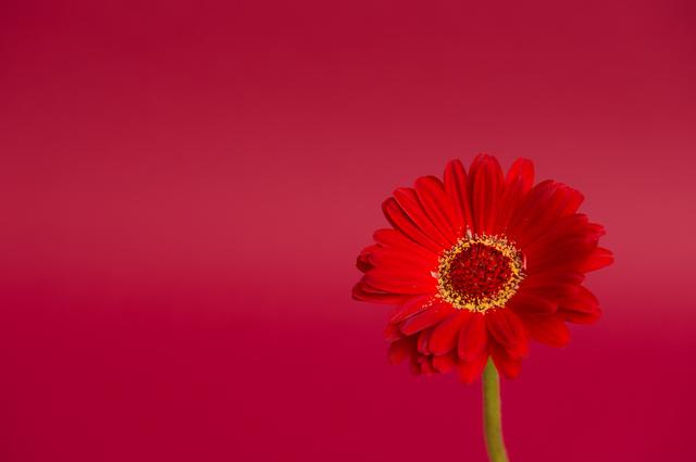 世界 に 一 つ だけ の 花 作詞